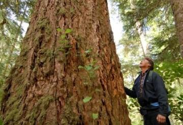 505 a tree